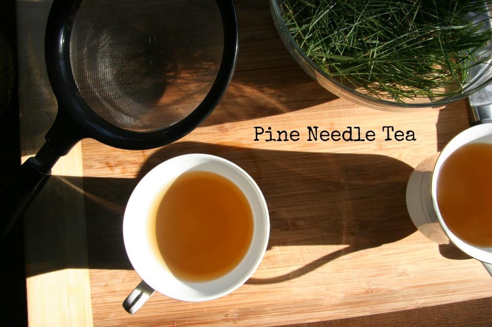 pine needle tea